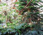 (Українська) Ботанічний сад